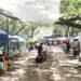Tamarindo farmers market