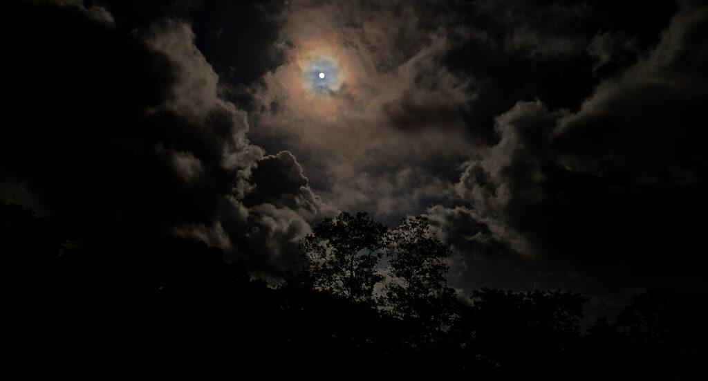 Månen lyser klart när vi går upp för att titta på sköldpaddor som kläck